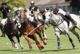 Polo & Sports Science: an unlikely pair or a match made in heaven?